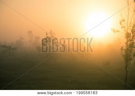 A Bright, Golden Landscape Of A Marsh After The Sunrise. Bright, White Light Pouring Over The Scener