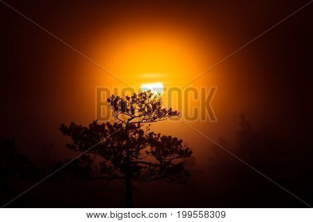 A Beautiful Disc Of A Rising Sun Behind The Pine Tree. Dark, Mysterious Morning Landscape. Apocalypt