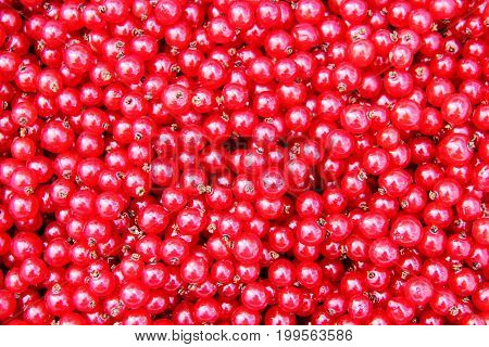 the redcurrant texture background close up dietails