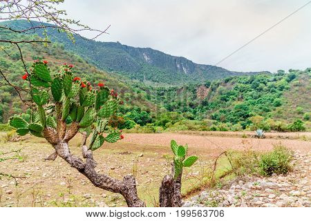 View on colorful Cactus in front of mountain landscape by Oaxaca