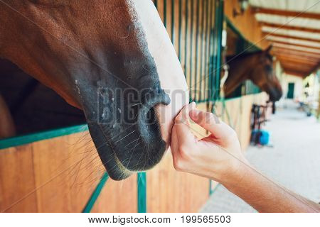 Touch of the friendship between man and horse in the stable.