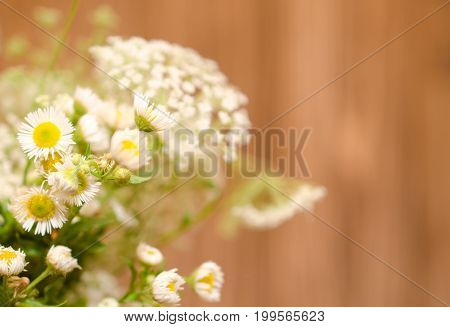 Beautiful blurred wild chamomile flowers against the wooden background (very shallow DOF selective focus) copyspace on the right