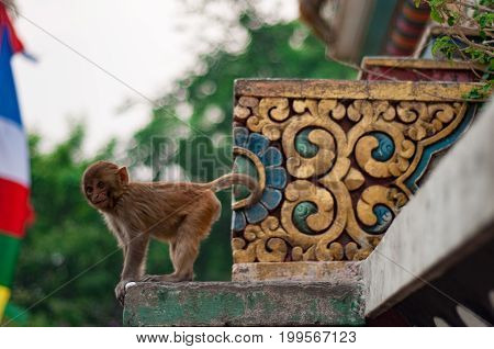 Monkey poses for camera next to an ornate piece of a temple.