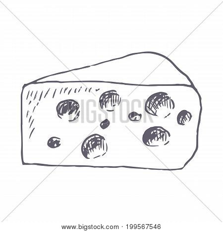 Cheese hand drawn vector illustration. Vector template