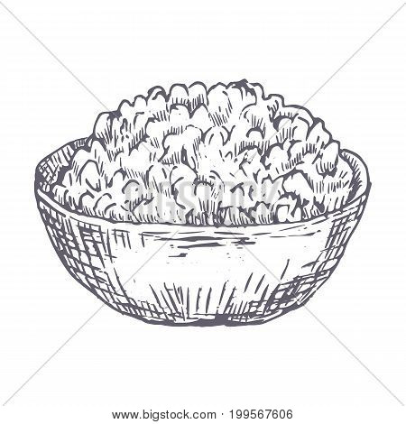 Cottage cheese drawn vector illustration. Vector template