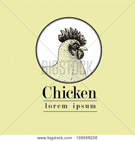 Vector hand drawn chicken illustration. Retro engraving style. Sketch farm animal drawing. Isolated fowls image on a white background. Logo template.
