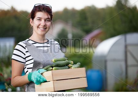 Photo of young woman with harvest of cucumbers in box on background of garden