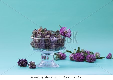 Dry Red Clover In A Glass Vase On Neutral Green Background. Plants For Healing Vascular Disease.