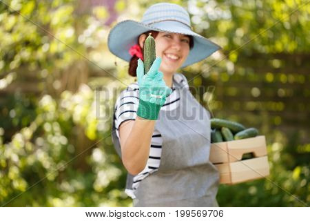 Agronomist in hat holds cucumber in hand and box under arm