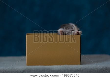 Kitten In Paper Box