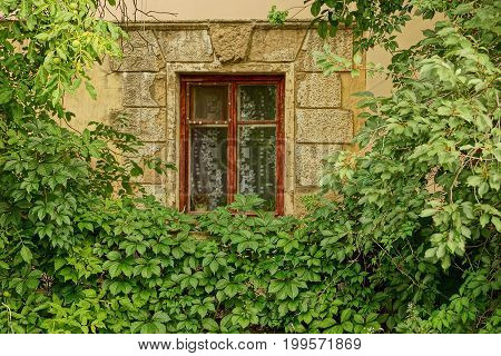 An old window on the wall of the building overgrown with greens and branches