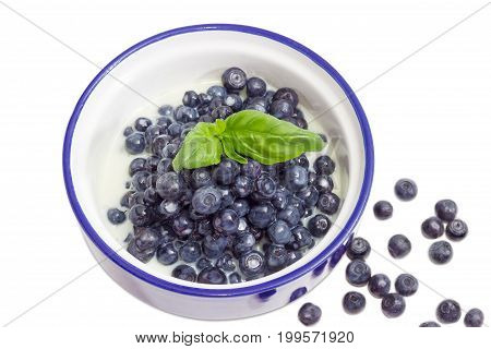 Top view of the blue bowl with dessert made of the fresh blueberries and sweetened condensed milk decorated with basil leaf and separately several berries beside on a white background