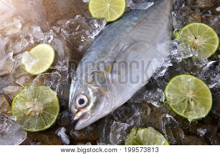 Trevally Fish Or Jack Frozen In Ice .