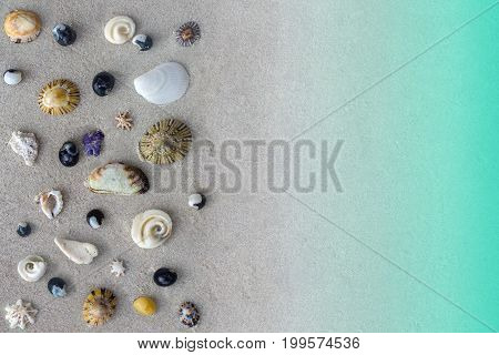 Many different seashells of Tasman sea on grey sand background or texture, sea and beach concept