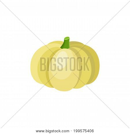 Cute cartoon yellow pumpkin squash, decoration element, cartoon vector illustration isolated on white background. Shiny yellow pumpkin squash, cartoon style vegetable