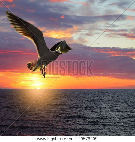 Scenic sunset seascape with taking wings sea gull