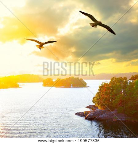 Sunset landscape with small islands in the archipelago of Stockholm and flying seagulls. Sweden