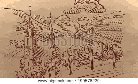 Vineyard Landscape In Europe