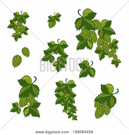 Green hop plant sketch style vector illustration isolated on white background. Realistic hand drawn ripe green hop cones beer brewing ingredient.