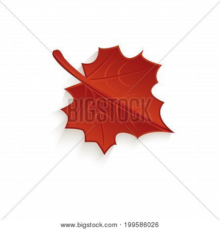 vector cartoon autumn fallen maple leaf isolated icon symbol. Illustration on a white background. Autumn object concept