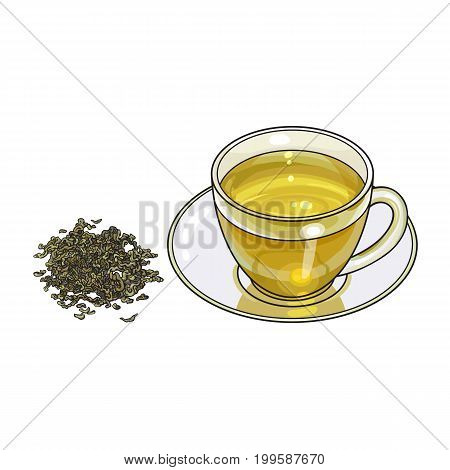 Transparent glass cup, saucer and ile, heap of dry green tea, sketch vector illustration isolated on white background. Hand drawn glass mug and saucer set with pile, heap of dry green tea