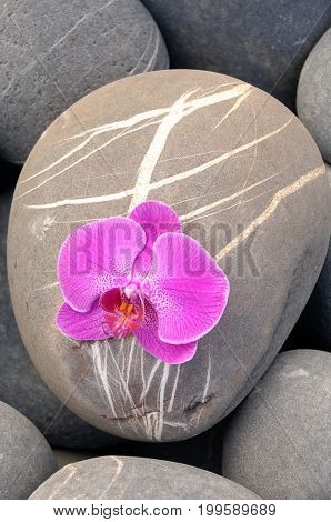 Pink orchid and pile of striped stones