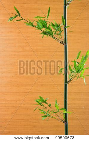 Bamboo leaves, isolated.-wooden wall