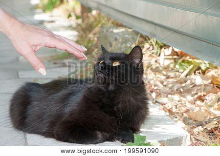 Portrait Of Beautiful Cat Againstin