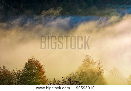 Glowing Fog Rise Over The Forest On Hillside