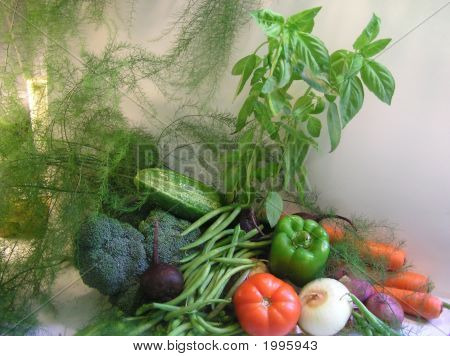Colorful Arrangement of vegetables and herbs