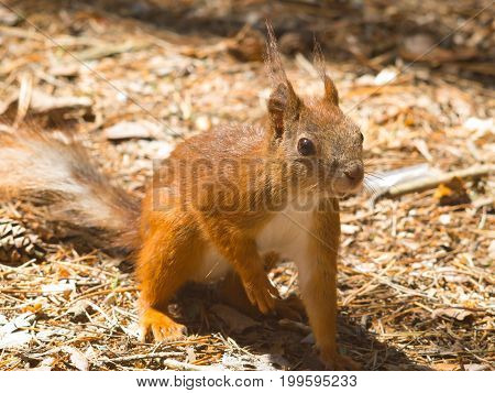 a squirrel in the woods during the summer