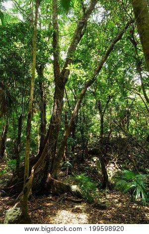 Tropical Rainforest Landscape Mexico Cancun Jungle .