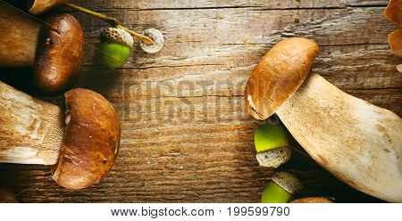 Ceps Mushroom Boletus over Wooden Background. Autumn Boletus edulis Mushrooms close up on wood rustic table. Cooking delicious organic mushroom. Gourmet food