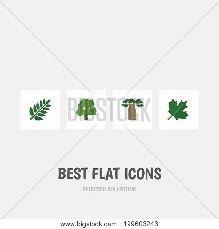 Flat Icon Natural Set Of Acacia Leaf, Baobab, Decoration Tree And Other Vector Objects