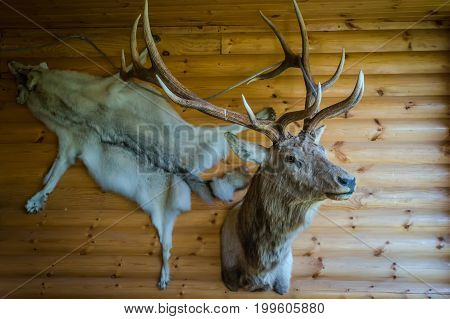 Mounted Stag Head On Cabin Wall