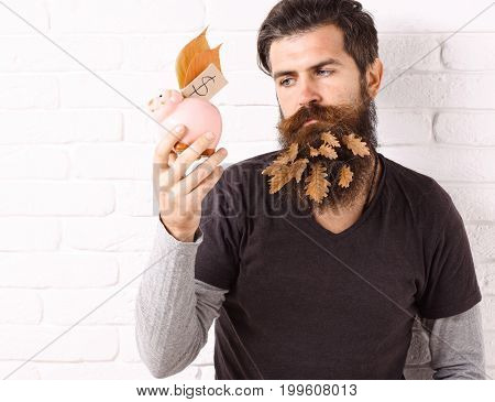 handsome bearded man with stylish mustache and autumn yellow leaves in long beard on serious face looks on pink piggy pig bank on white brick wall background