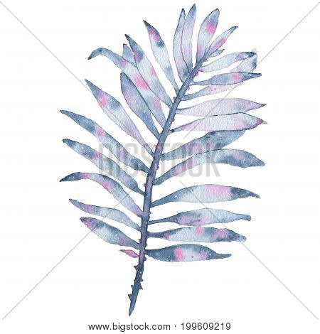 Watercolor tropical hand painted indigo leaf isolated on white background. Floral illustration. Botanical art