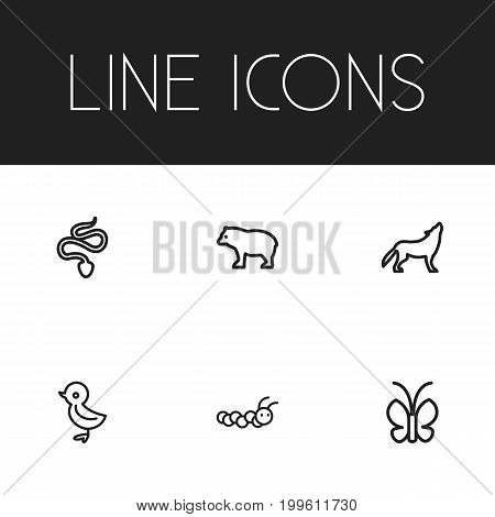 Set Of 6 Editable Zoology Outline Icons. Includes Symbols Such As Butterfly, Larva, Panda