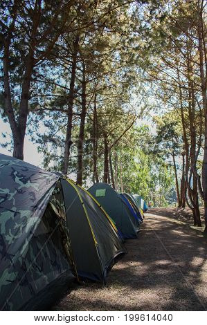 Adventures Camping and tent under the pine forest,Camping tent in the top of mountain in the morning