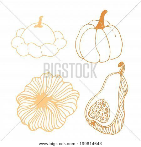 Seasonal autumn vegetables. Hand drawn vector set. Eggplant