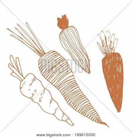 Seasonal autumn vegetables. Hand drawn vector set. Carrot