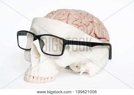 Skull and brain model with eyeglasses on the white background