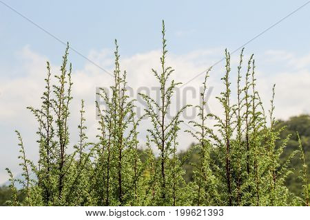 Photo Of Bright Tender Offshoot Of A Tree Growing