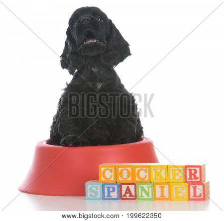 adorable cocker spaniel puppy sitting in dog dish with block letters