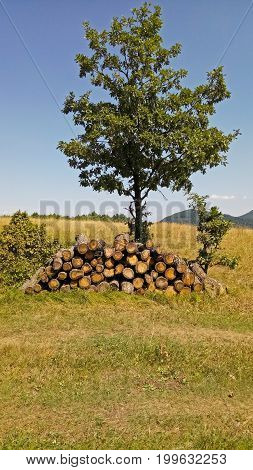 wood stock pile in the forest next to a rural road