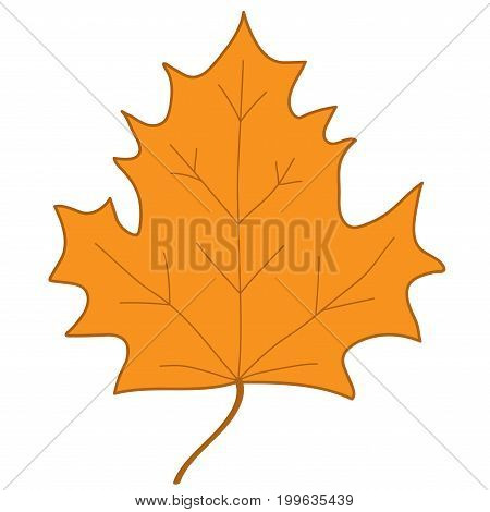 Maple leaf sign. Orange plane icon isolated on white background. Color nature logo. Botany autumn wood or garden symbol. Ecology flat silhouette. Foliage mark. Stock vector illustration