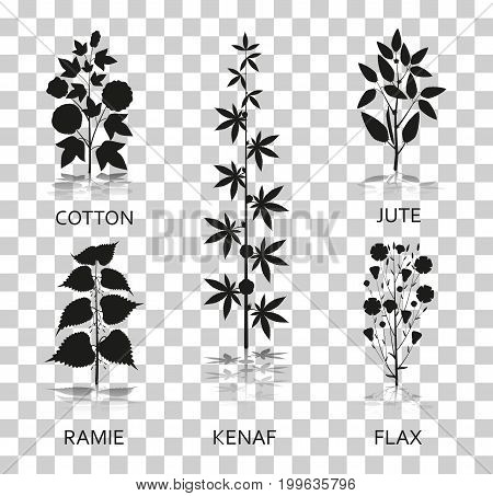 Cotton, ramie, kenaf, jude and flax plants with leaves, pods and flowers. Silhouette icons with reflection on transparent background. Vector illustration.