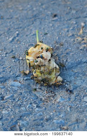 The bees and flies eat the pear on the ground