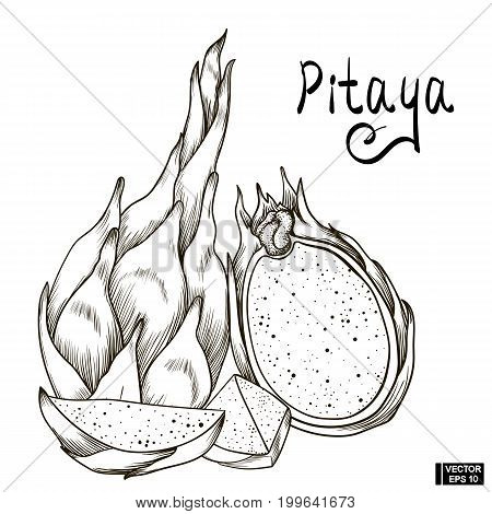 Fruit Sketch Of Pitaya.