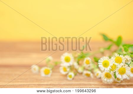 Beautiful wild chamomile flowers against the wooden background (shallow DOF selective focus) copyspace on the left